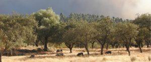 INCEDECA con los damnificados del incendio del campo onubense