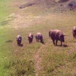 CURSO «CERTIFICACIÓN DE BIENESTAR ANIMAL INICIACIÓN WELFAIR PORCINO»